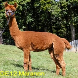 DE12_Maranon